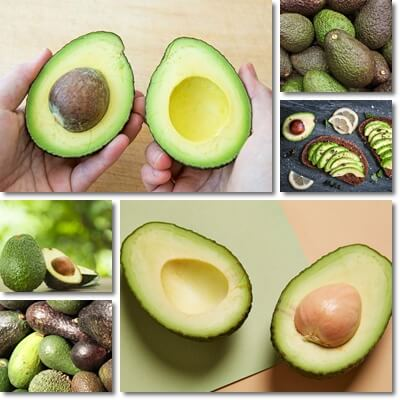 8 Side Effects and Contraindications of Avocado