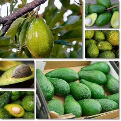 Avocado: How Many to Eat per Week?