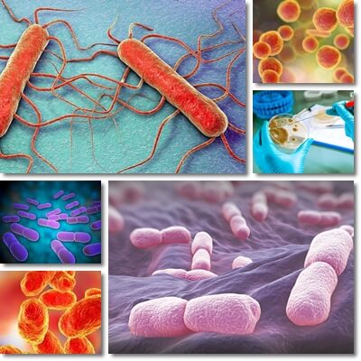 Listeria Monocytogenes Infection: Causes, Symptoms and Treatment