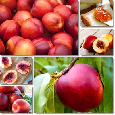 Nectarines blood sugar