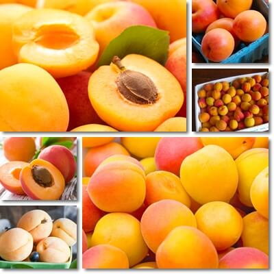 8 Biggest Benefits of Apricots for Diabetes