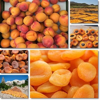 Dried apricots benefits diabetes