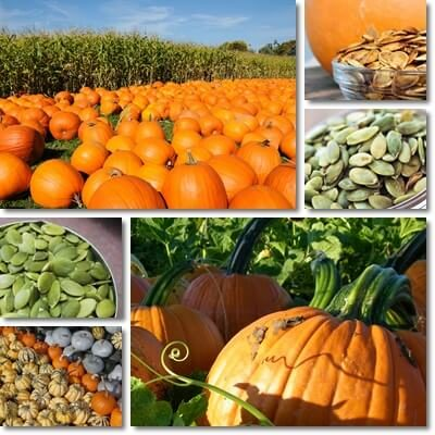 Pumpkin seeds side effects and benefits