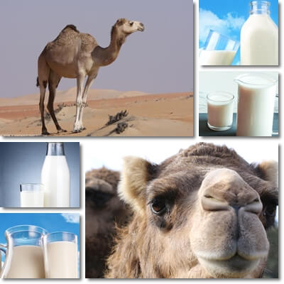Properties and Benefits of Camel Milk