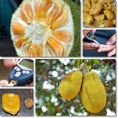 Jackfruit diabetes