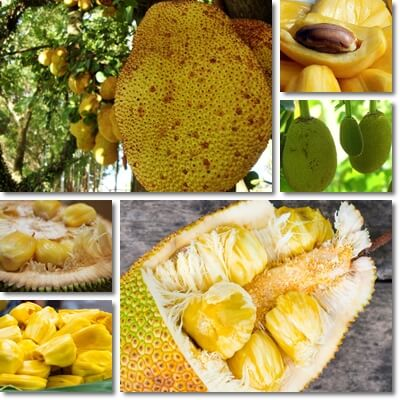 Jackfruit glycemic index