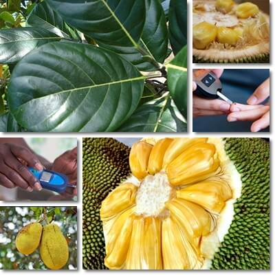 Jackfruit leaves blood sugar