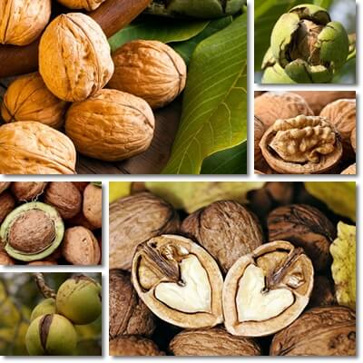 Walnuts and blood sugar