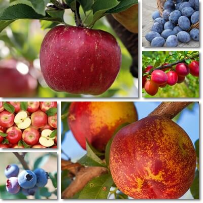 Common low glycemic fruits