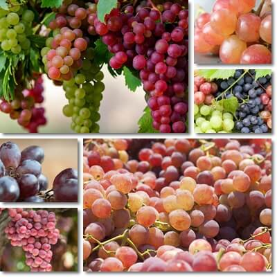 What Is the Glycemic Load of Grapes?
