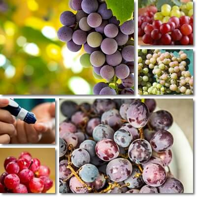 Grapes glycemic index