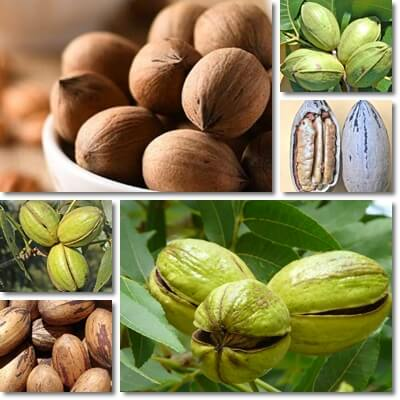 Do Pecans Lower or Raise Blood Sugar?