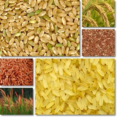 Rice glycemic index