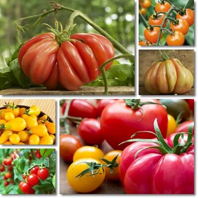 Tomatoes glycemic index and load