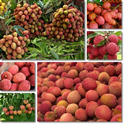 The Glycemic Index of Lychee