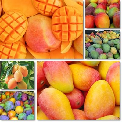 The Glycemic Index of Mango