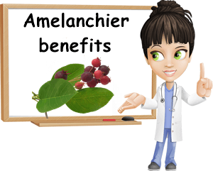 Amelanchier serviceberry benefits