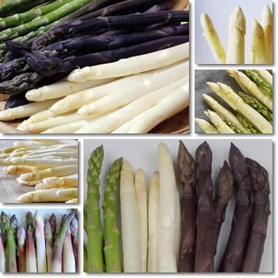 Green asparagus vs purple and white