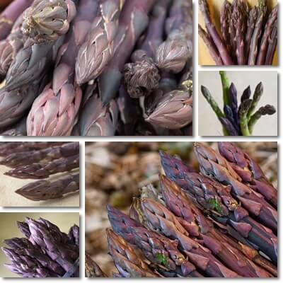 Purple asparagus benefits