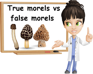 True morel vs false morel