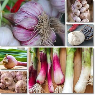 Garlic on empty stomach