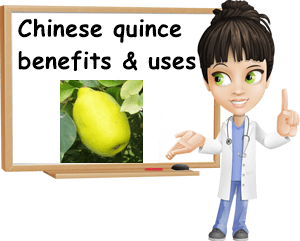 Chinese quince benefits and uses