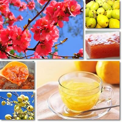 Chinese quince benefits