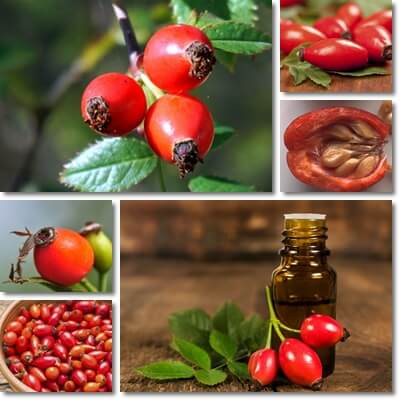 Rose hip oil benefits