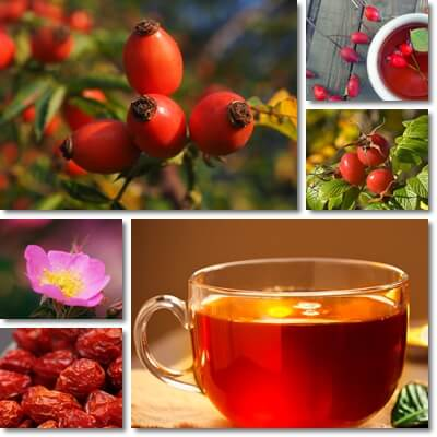 Rose hip tea benefits and side effects