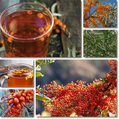 Sea-buckthorn tea