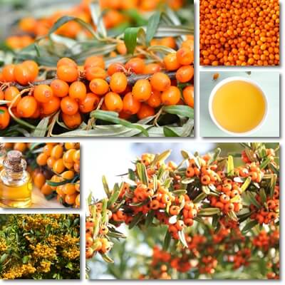 Sea-buckthorn seed oil