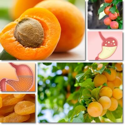 Apricots and acid reflux
