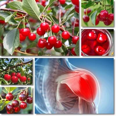 Cherries muscle recovery