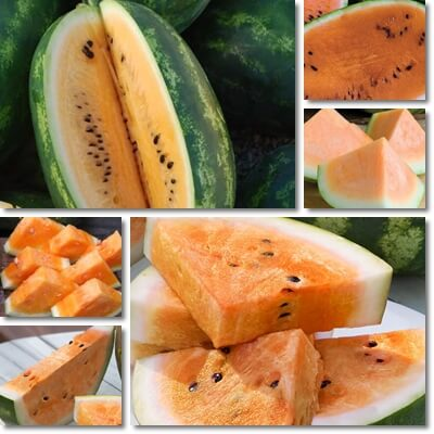 Orange watermelon benefits and nutrition