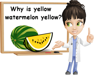 Why is yellow watermelon yellow