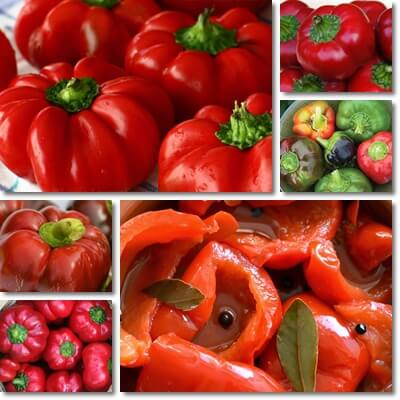 Round of Hungary peppers