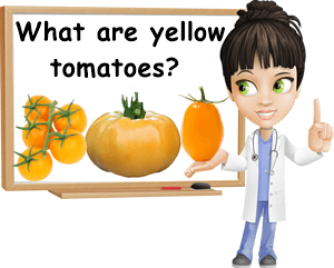 What are yellow tomatoes