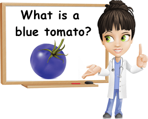 What is a blue tomato