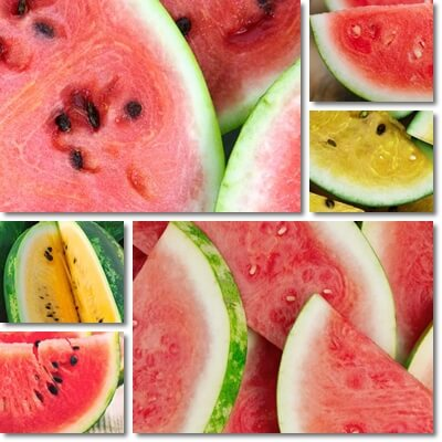 White part of watermelon benefits