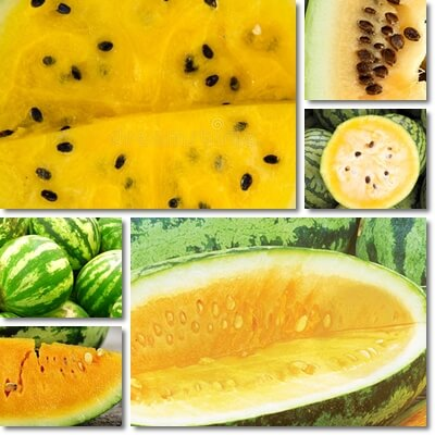 Yellow watermelon seeds