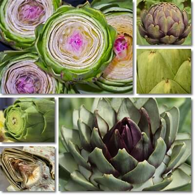 Artichoke leaf extract benefits