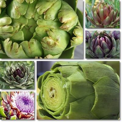 Artichoke leaf extract for weight loss