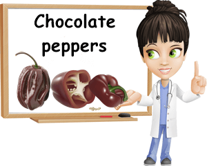 Chocolate peppers benefits