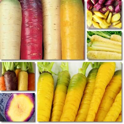 Yellow carrots nutrition facts