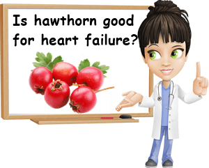 Hawthorn benefits for congestive heart failure