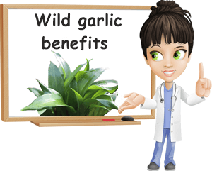 Wild garlic benefits