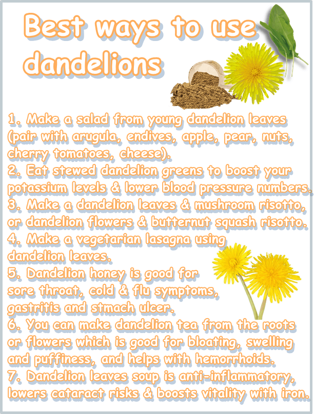 Dandelion benefits and uses