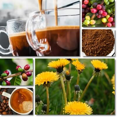 Dandelion coffee vs coffee