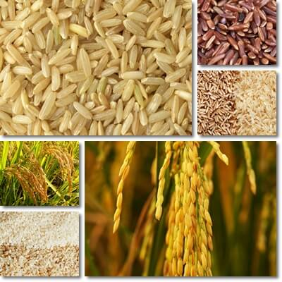 Reasons rice is good for you