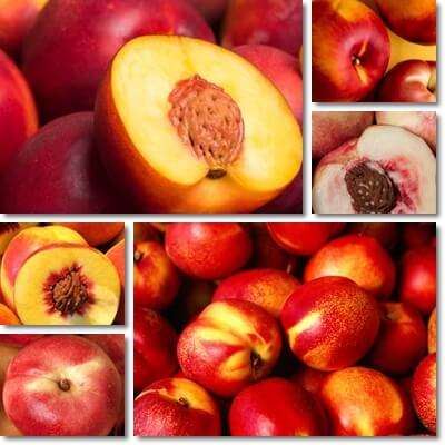 What are nectarines